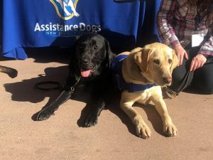 Two assistance dogs lie in the sun in front of the Assistance Dogs New Zealand logo